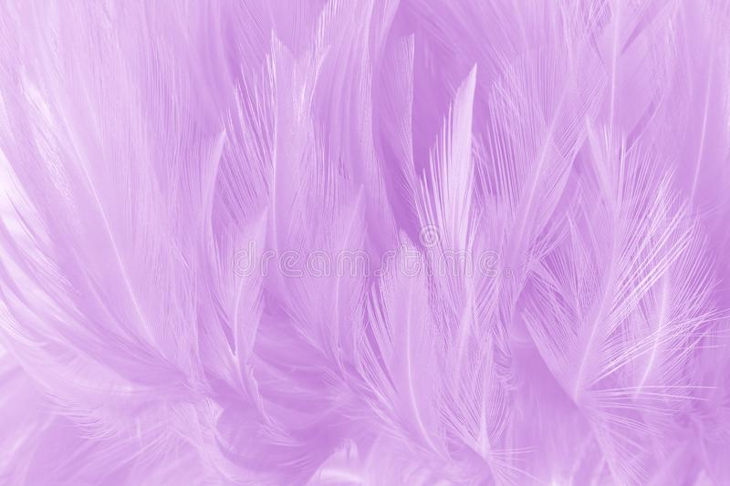 Soft purple color feathers texture background royalty free stock photography