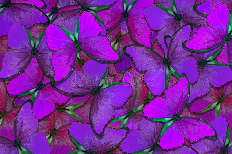 Soft purple natural textural background. Wings of a butterfly Morpho. Flight of bright butterflies abstract background royalty free stock photography