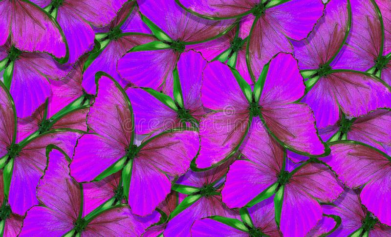 Soft purple natural textural background. Wings of a butterfly Morpho. Flight of bright butterflies abstract background royalty free stock photo