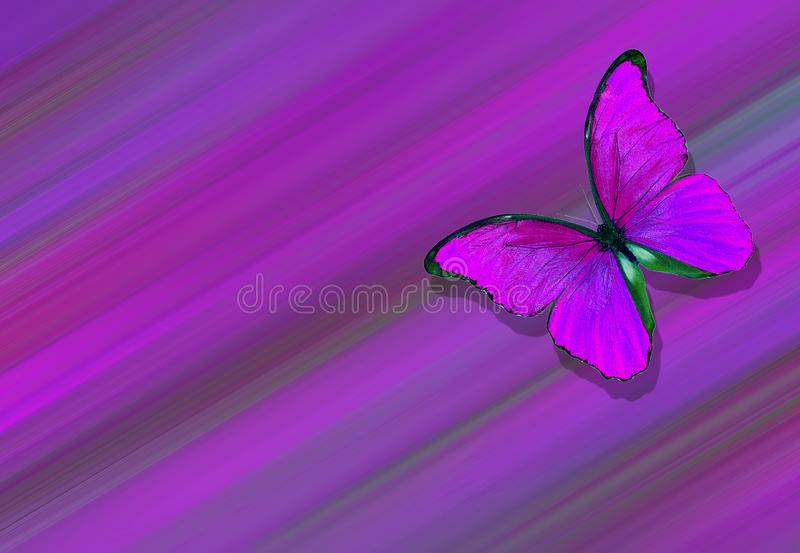Soft purple natural textural background. Wings of a butterfly Morpho. Flight of bright butterflies abstract background royalty free stock photos