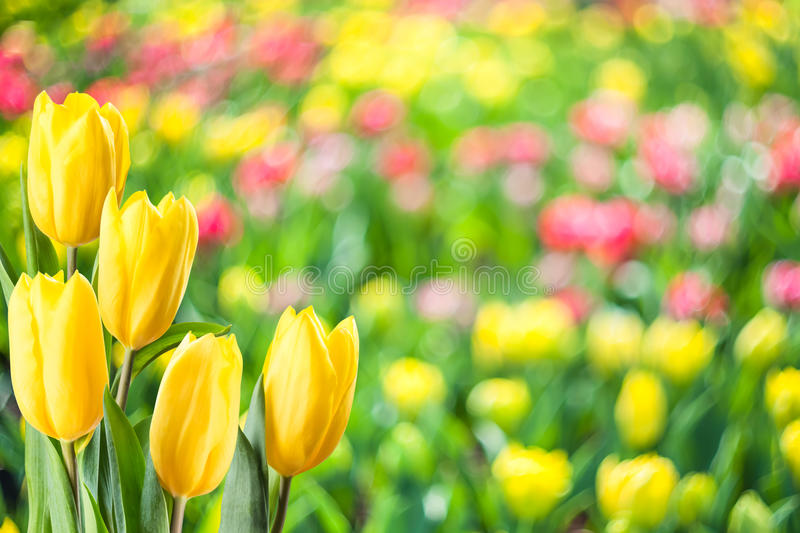 Soft Spring Floral Background royalty free stock images