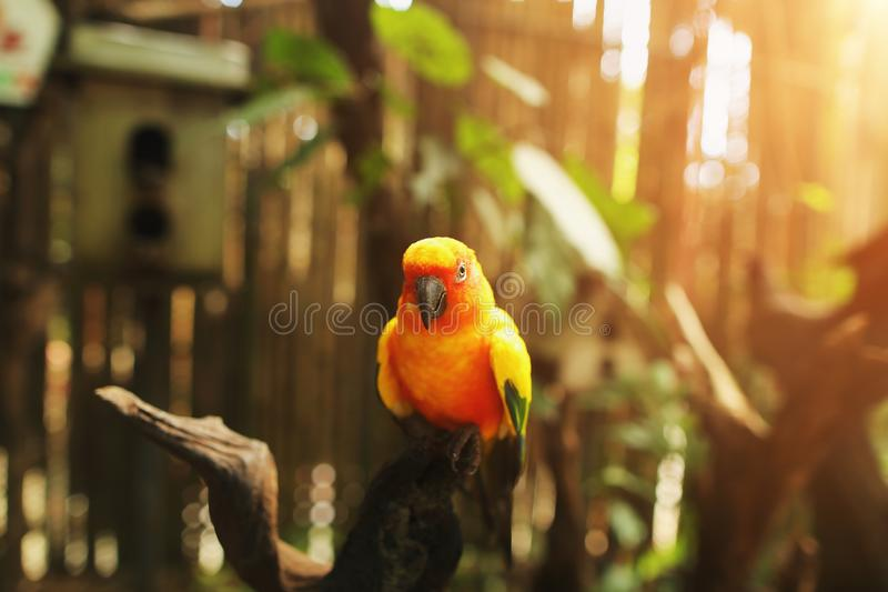Soft sunshine portrait of an exotic parrot orange color on sunny day in Thailand stock photos
