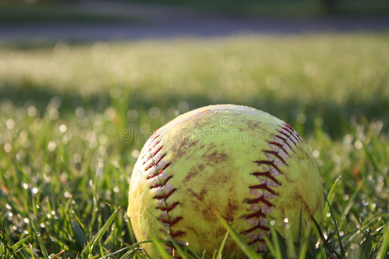 Used Softball in dewy grass. Well used and worn softball nestled in dewy green grass stock photography