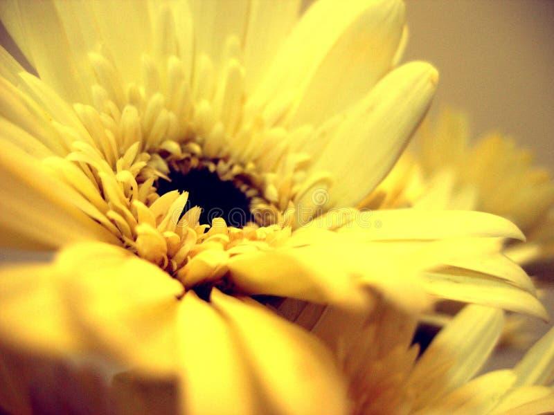 Download Softness stock photo. Image of romance, calm, peaceful - 274342