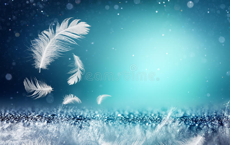 Softness And Freshness Concepts - Feathers. And Dew royalty free stock photos