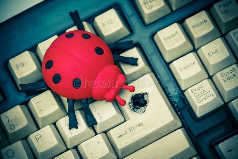 Software bug. / A ladybug on computer keyboard stock photos
