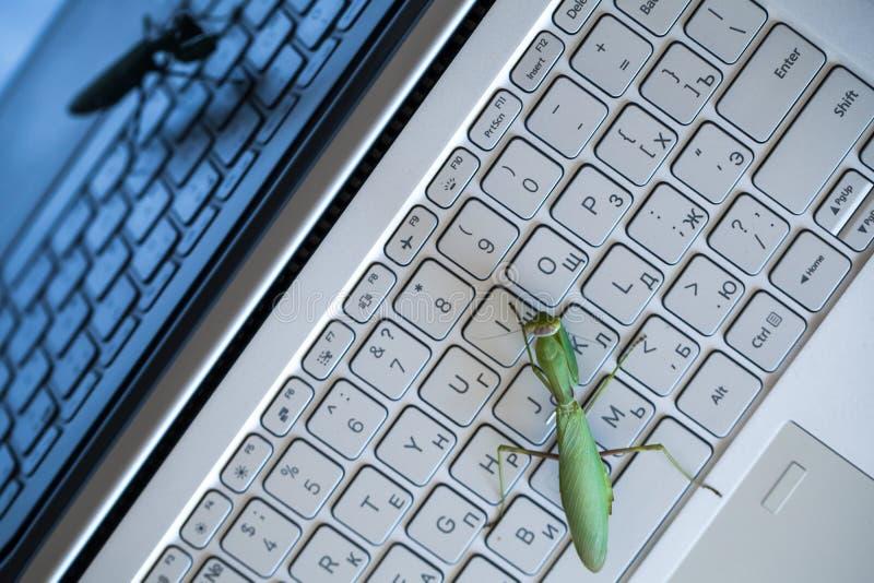 Software bug metaphor, mantis on keyboard. Software bug metaphor, green mantis is on a laptop keyboard, top view stock photo
