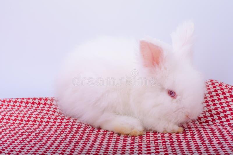 Soggiorno bianco del coniglio del piccolo occhio rosa-rosso sveglio sul panno rosso delle bande con fondo bianco immagini stock