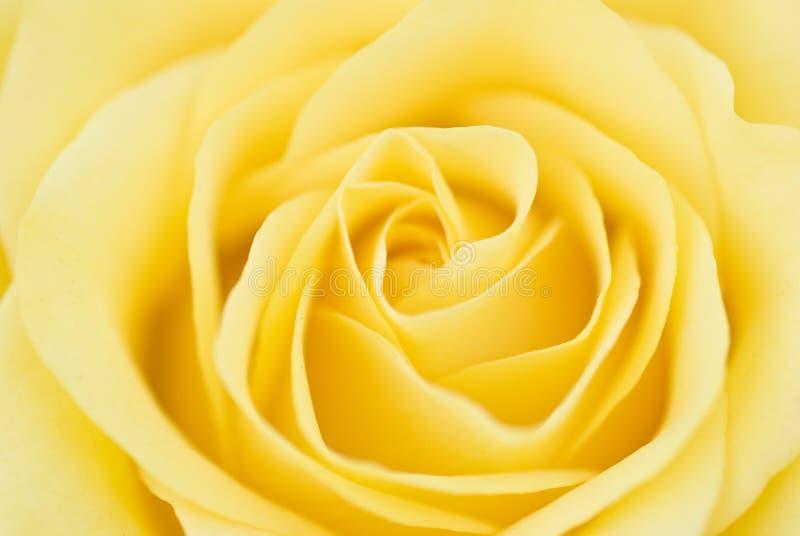 Sogni 2 della Rosa immagini stock libere da diritti