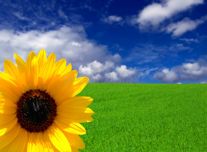 Sogni di estate fotografia stock libera da diritti