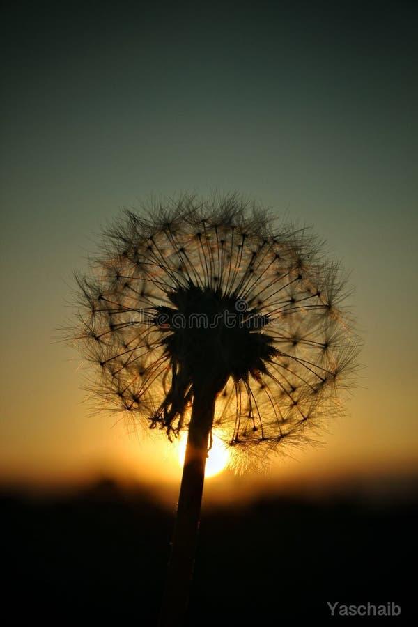 sogni fotografie stock