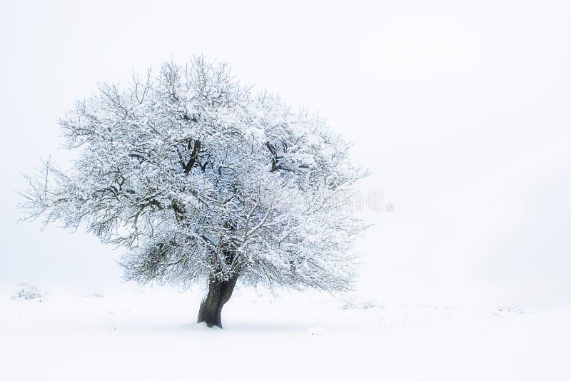 Sogno bianco fotografia stock libera da diritti