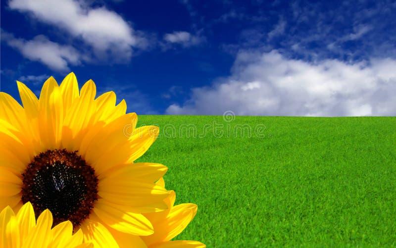 Sogno di estate fotografie stock libere da diritti