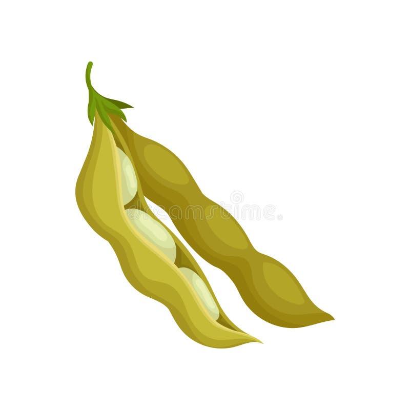 Soia, illustrazione vegetariana sana di vettore dell'alimento su un fondo bianco illustrazione di stock