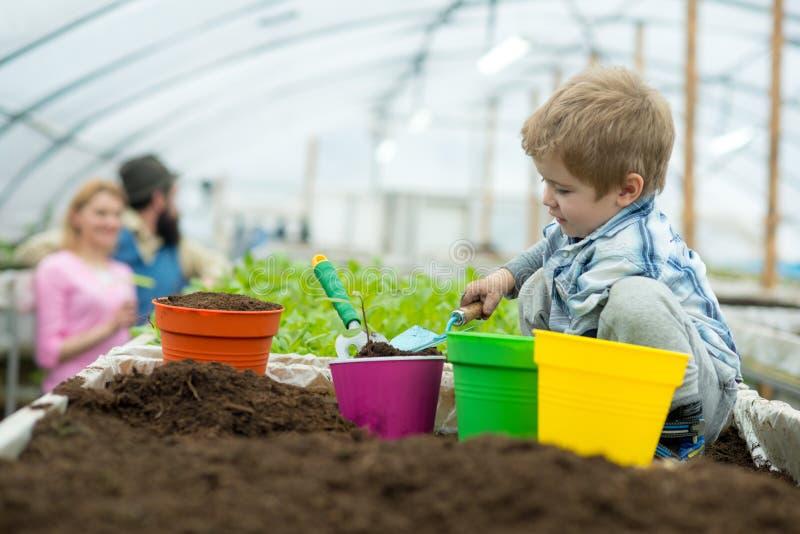 Soil analysis. little boy making soil analysis in greenhouse. soil analysis for planting trees. soil analysis concept royalty free stock image
