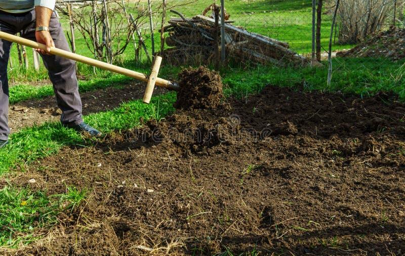 Soil anchoring preperation. Soil anchoring vegetables preperation time royalty free stock image