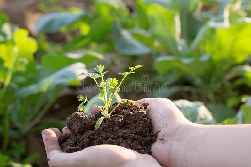 Soil cultivated dirt, earth, ground, agriculture land background. stock photography