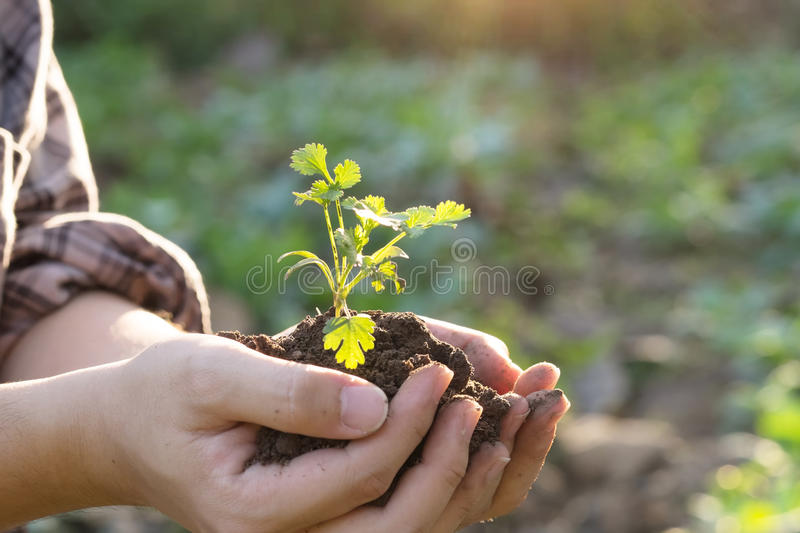 Soil cultivated dirt, earth, ground, agriculture land background Nurturing baby plant on hand. royalty free stock photos