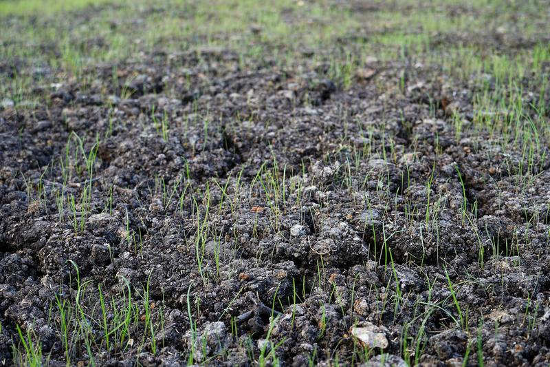 The soil of the earth, a field with growing grass. Fresh young green grass. The fields are dry, the land is broken close-up. And stock photos