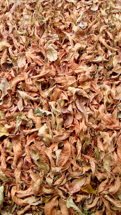 Soil full of leaves royalty free stock photography
