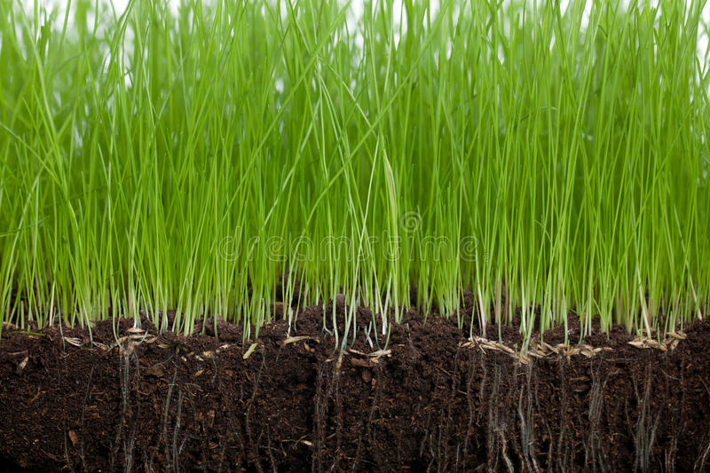 Soil and Grass royalty free stock images
