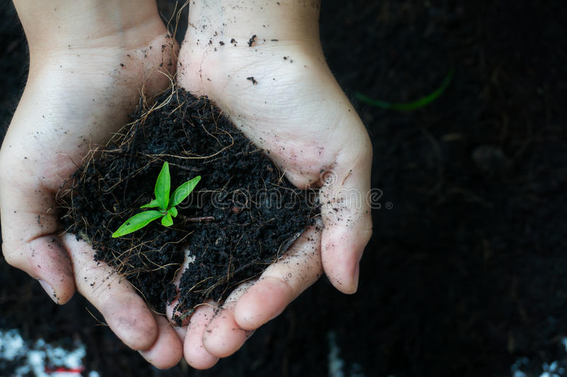 Soil in hand. stock photos