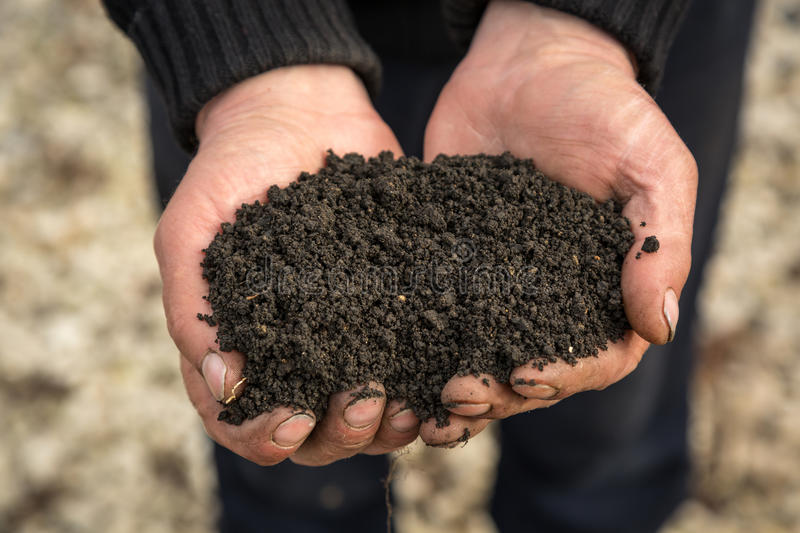 Soil in hand. Hand holding healthy soil. Color version royalty free stock images