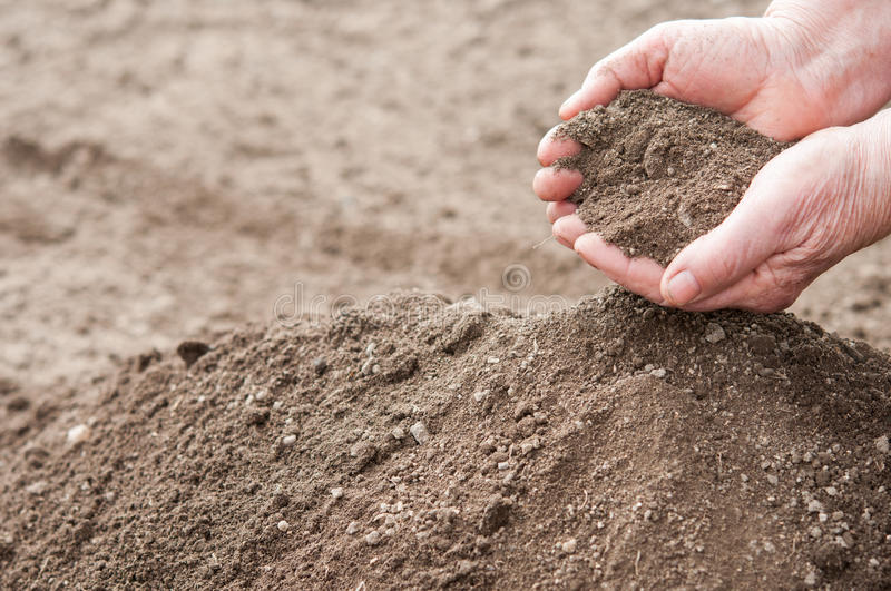 Soil in hands. Soil in old woman hands- close up stock photography
