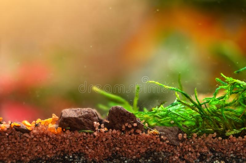 Soil layers, macro landscape of small pebbles . stock photos
