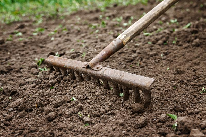 On the soil lie the garden rake. Close-up, Concept of gardening.  royalty free stock photography