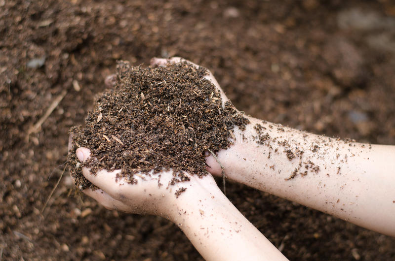 Soil mineral. In farmer arms royalty free stock image