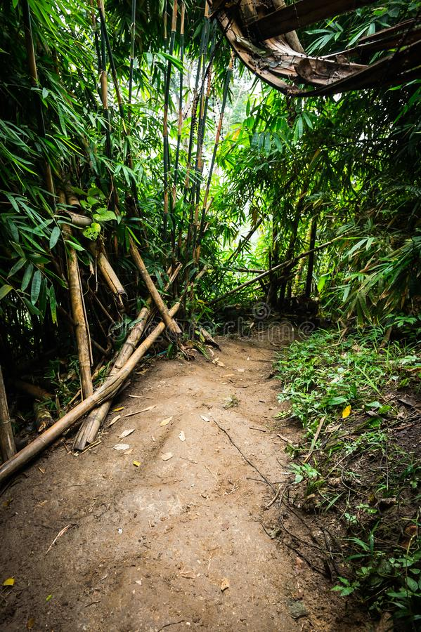 Soil path and bamboo tree in forest. Landscape royalty free stock photos