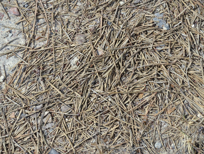 Soil texture, brown ground soil mixed with small rocks stock photography