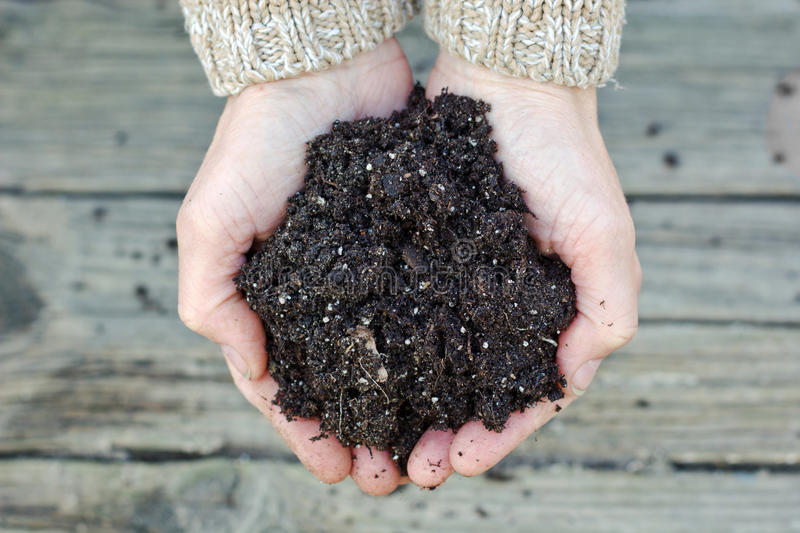 Soil. Two hands with garden soil royalty free stock photo