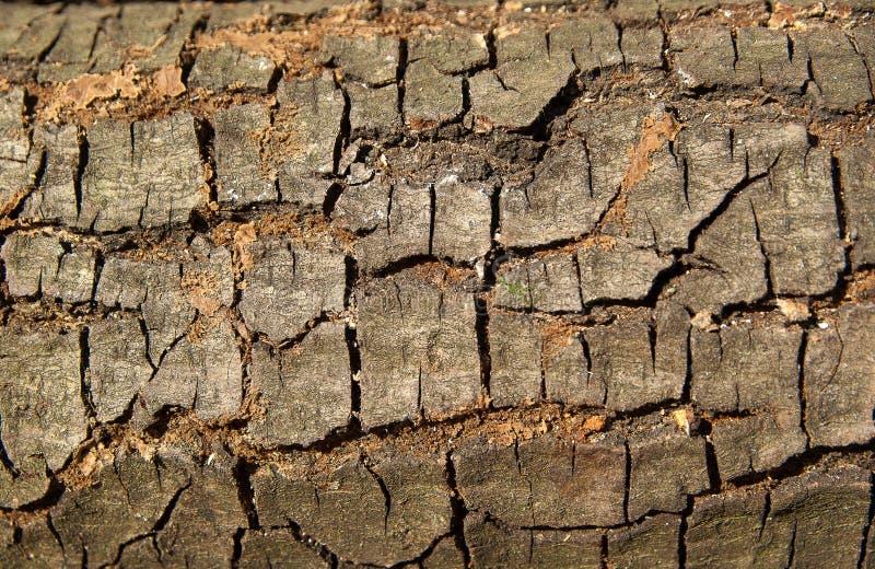 Soil, Wood, Tree, Wall Free Public Domain Cc0 Image