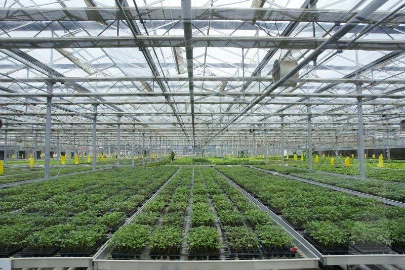Soilless greenhouse royalty free stock image