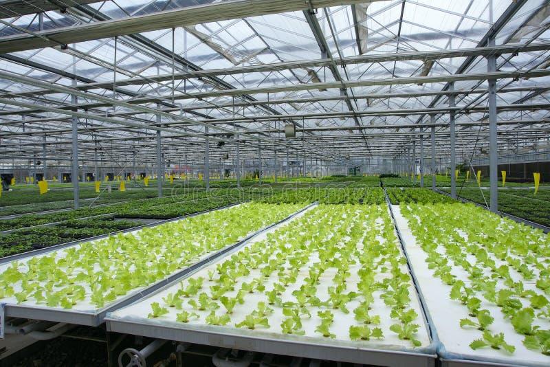 soilless växthus arkivbilder