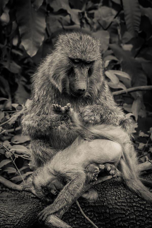 Soin de mère photographie stock libre de droits