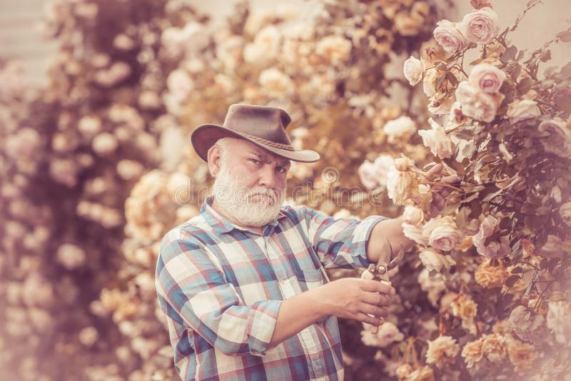 Soin et arrosage de fleur Fleurs coupées de jardinier dans son jardin Agriculteur barbu d'homme en parc avec la campagne photographie stock libre de droits