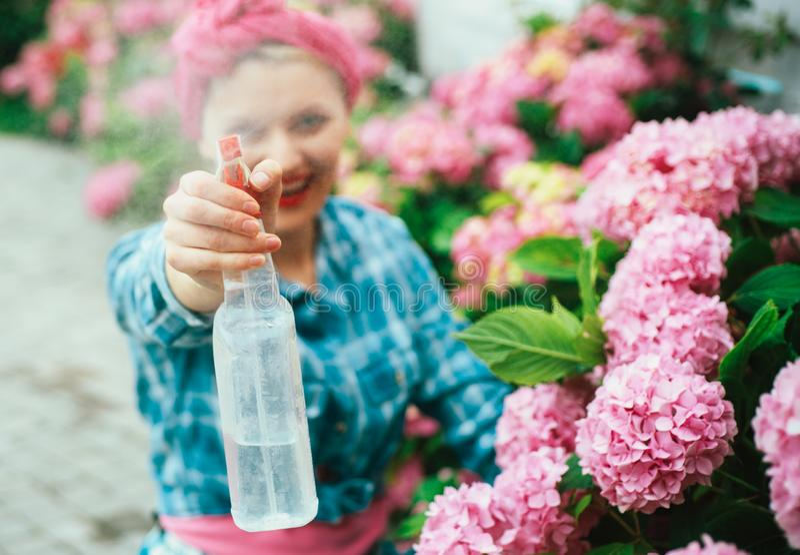 Soin et arrosage de fleur sols et engrais hydrangea Ressort et été jardinière heureuse de femme avec des fleurs Femme photographie stock libre de droits