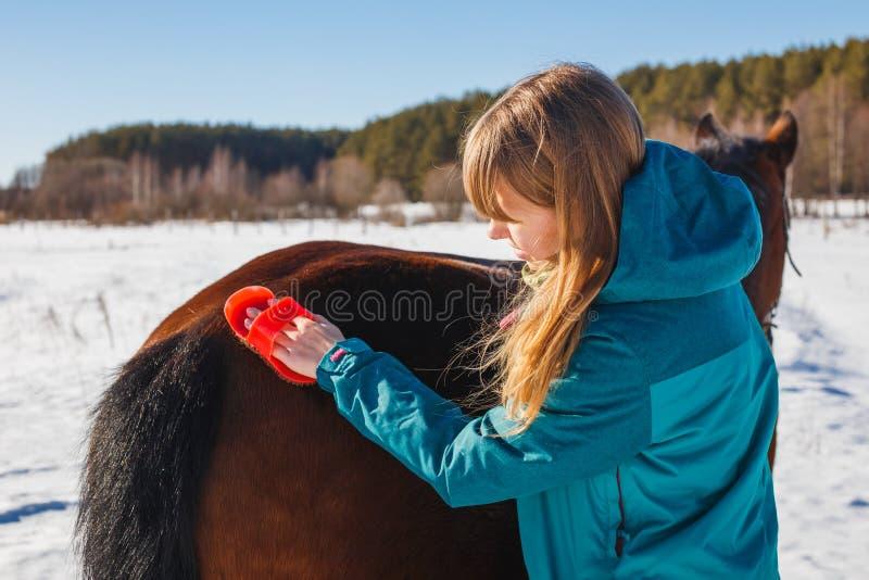 Soins d'un cheval balayant avec une brosse de fibre et de poussière en hiver image stock