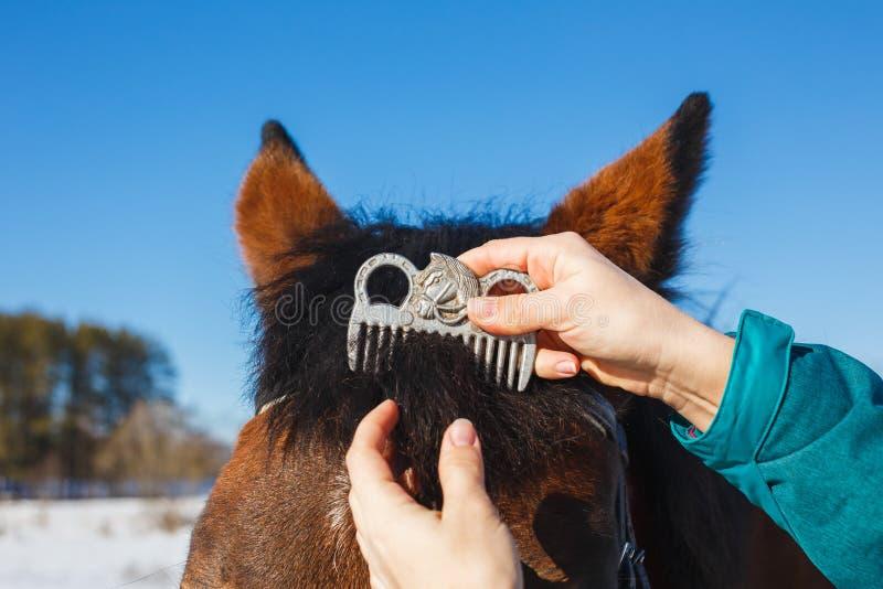 Soins d'un cheval Peignée du peigne spécial de crinière sur la tête de cheval photo stock