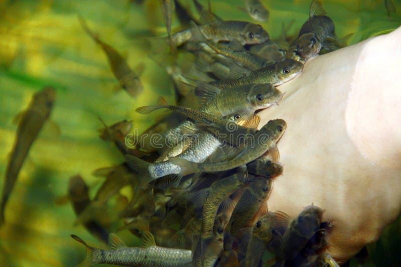 Soins de la peau de station thermale de poissons photographie stock libre de droits