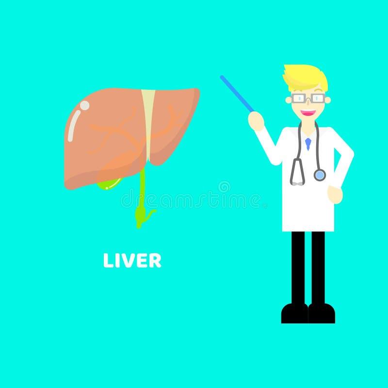 Soins de santé médicaux de foie de chirurgie d'anatomie de système nerveux de partie du corps d'organes internes avec le docteur, illustration de vecteur
