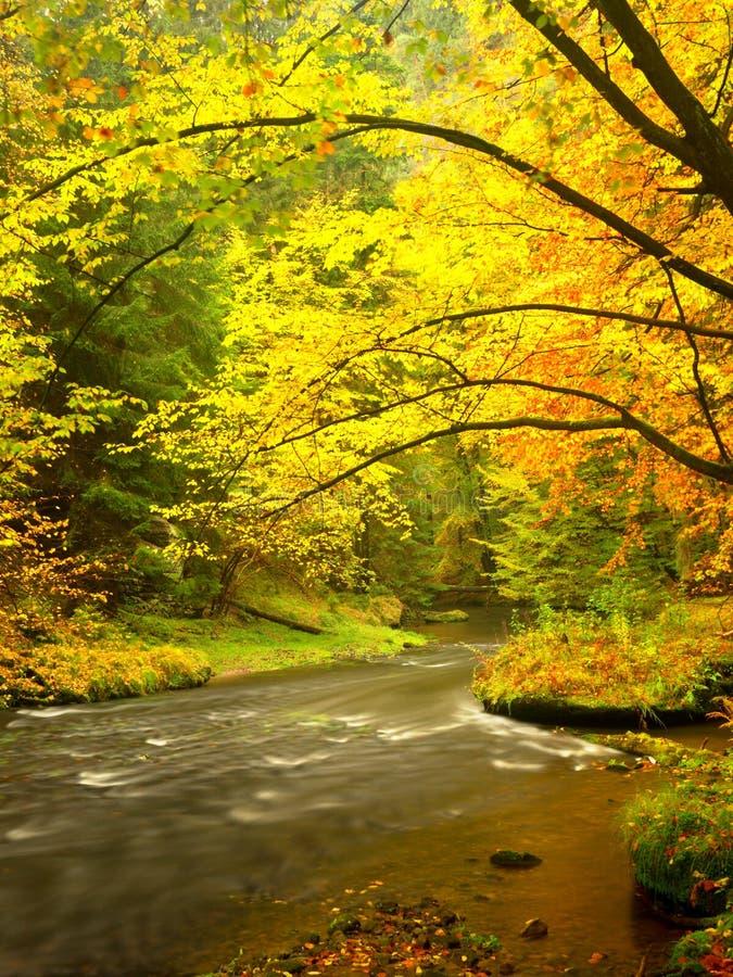 Soirée à la rivière dans des couleurs lumineuses d'automne Humidité en air après jour pluvieux image stock