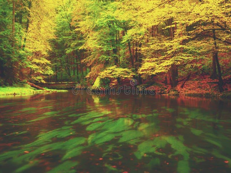 Soirée à la rivière dans des couleurs lumineuses d'automne Humidité en air après jour pluvieux photos libres de droits