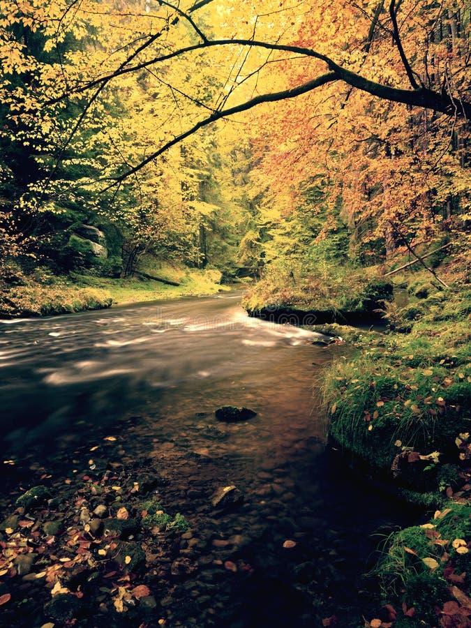 Soirée à la rivière dans des couleurs lumineuses d'automne Humidité en air après jour pluvieux photographie stock libre de droits
