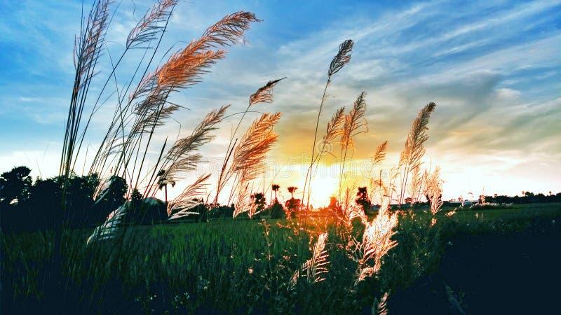Soirée avec le coucher du soleil photo stock