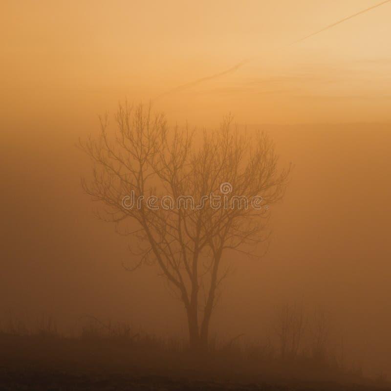 Soirée brumeuse de coucher du soleil, paysage avec un arbre photos libres de droits