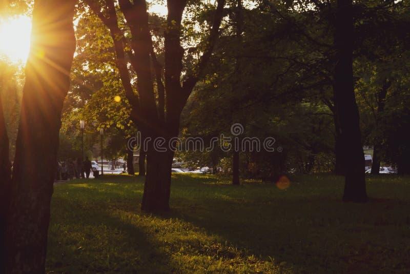 Soirée d'été dans Central Park, New York Belle vue de ville photographie stock libre de droits
